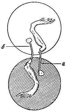Глава 1. Физиология возбудимых тканей.