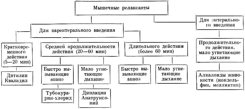 Классификация мышечных